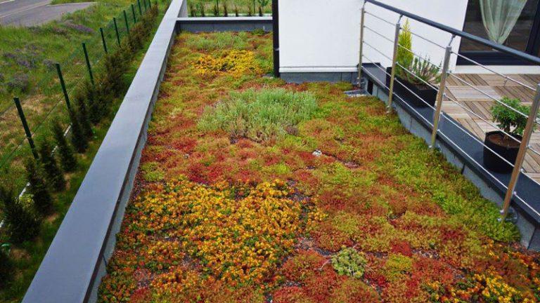 terrasse végétale
